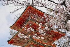 #41 清水寺·櫻 (TridentWei) Tags: 41