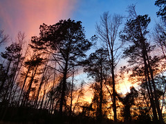 Woods At Sunset. (dccradio) Tags: lumberton nc northcarolina robesoncounty outdoor outdoors outside nature natural woods wooded forest tree trees treebranch branch branches treebranches cloud clouds pinkclouds bluesky sky evening silhouette landscape march spring springtime sunday sundayevening sundaynight goodevening goodnight sony cybershot dscw830