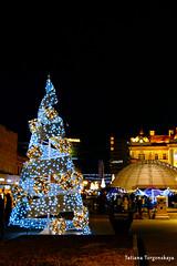 Елка у католической церкви (tatianatorgonskaya) Tags: сербия зимавсербии новыйгод рождество европа балканы путешествие блогопутешествиях блогожизнизарубежом balkans balkanstravel balkan srbija serbia europe novisad новисад зимавновисаде новыйгодвсербии новыйгодвевропе