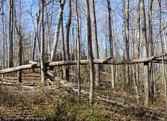 Garbage (photoeclectia1) Tags: dogwood2019 dogwood52 dogwoodweek12 trees naturesgarbage