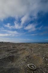Coronado Springs (dweible1109) Tags: 18140mmnikkor d5600 nikon cloudscape clouds skyline skyscape sky shells sand beach coronadosprings california