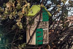 Bee hotel 🐝 🏨 (crispiks) Tags: macro close up nikon d750 105 micro 28 r1c1 flash wodonga north east victoria bee hotel