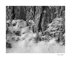 Low Clouds (agianelo) Tags: tree bark snow monochrome bw bn blackandwhite abstract texture