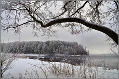 Backwater / Затон (SerenitySS) Tags: bay backwater snow lake shore forest water ice tree branch grass january graphics frost amazing great loveit beautiful monochrome blackwhite wonderful naturethroughthelens coth5 fav20 saariysqualitypictures landscape