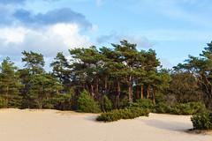The forest (jan.vd.wolf) Tags: soest utrecht nederland nl forest wald forêt natuur nature boom tree arbre wolken lesnuages duinen dunes cloud landschap landscape paysage