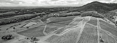 Mt Pleasant (OzzRod) Tags: dji phantom3advanced drone quadcopter fc300s panorama monochrome blackandwhite mtpleasant pokolbin nsw rural agriculture viticulture vineyards