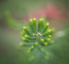 Selective Focus. (Omygodtom) Tags: tamron90mm tamron texture dof bokeh d7100 green pov outside trail wildflower red usgs selectivefocus flora