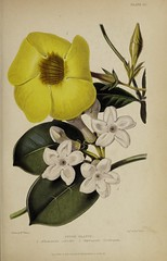 n824_w1150 (BioDivLibrary) Tags: gardening horticulture usdepartmentofagriculturenationalagriculturallibrary bhl:page=57724421 dc:identifier=httpsbiodiversitylibraryorgpage57724421 artist:name=augustainneswithers augustainneswithers hernaturalhistory