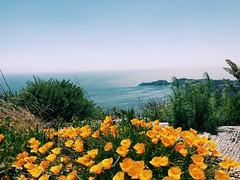 sausalito (vhickey25479) Tags: sausalito california flower ocean