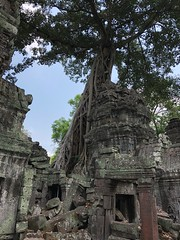 Tree in the walls at Ta Prohm, Cambodia (Herculeus.) Tags: 5photosaday cambodia taprohm iphone8 outside outdoor outdoors archeologicalsite ruins buildings stone trees