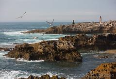 Seascape, Cascais, Portugal (KronaPhoto) Tags: portugal vann atlanterhavet view seagull måker kyst seaside seascape cascais