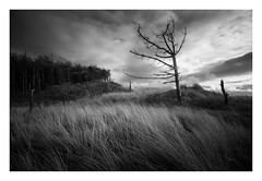 Newborough Forest - January 15th (Edd Allen) Tags: wales northwales anglesey snowdonia sea seascape seaside shore shoreline atmosphere sunrise grass wind atmospheric clouds landscape uk nikond610 zeissdistagon 18mm infrared newborough forest tree sand sanddunes