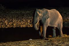 Okaukuejo Waterhole I (jameshjschwarz) Tags: africa afrika elefant elephant etosha etoshanationalpark lumixgvario4056100300 lumixgh2 m43 mft namibia okaukuejo safari wasserloch waterhole oshana na