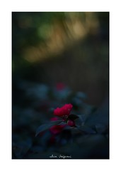 2019/2/17 - 10/24 photo by shin ikegami. - SONY ILCE‑7M2 / Carl Zeiss C Sonnar T* 1.5/50 ZM (shin ikegami) Tags: asia sony ilce7m2 sonyilce7m2 a7ii 50mm carlzeiss sonnar csonnar50mmf15 tokyo sonycamera photo photographer 単焦点 iso800 ndfilter light shadow 自然 nature 玉ボケ bokeh depthoffield naturephotography art photography japan earth