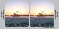 05_stereokarte_P1340410 (said.bustany) Tags: stereo stereokarte 2019 märz frost sonnenaufgang baum