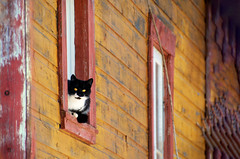 Oversight (emerge13) Tags: cats animal animals stsévèrequébec bokeh oldhouses colors windows ventanas chats fenêtres gatos stsévère quebec countryside