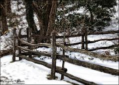 Happy Fence Friday... (angelakanner) Tags: canon70d fencefriday fence wood winter snow frankmelvillepark longisland