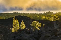 Sunset at el Teide (Helmut Wendeler aus Hanau) Tags: kanaren lichtstimmung pinien sonnenstern sonnenuntergangaufdelteide teneriffa