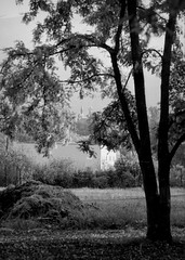 Distance (p2-r2) Tags: nikon f3 f3hp france blackandwhite film agfa apx 100 new emulsion trees village town church leaves