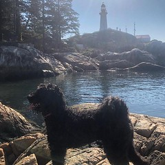 🐕 + lighthouse + 🌞 = 😃 (Stv.) Tags: ifttt instagram phoneography