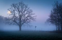 misty morning (mad_airbrush) Tags: 5d 5dmarkiii 2470mm 2470mmf28lusm 2470mmf28l morning morgen nebel neblig fog foggy mist germany deutschland saxony sachsen landscape landschaft blue trees tree baum moon mond hdr hdri