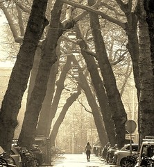 Into the Sun (Hans Veuger) Tags: nederland thenetherlands amsterdam amsterdamzuid lomanstraat zwwt bw bomen trees willemspark nikon b700 coolpix nederlandvandaag twop unlimitedphotos