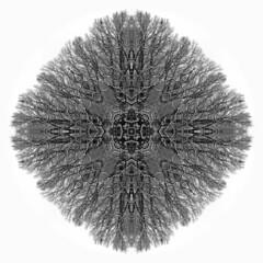 Oak Cross (Don Henderson) Tags: oaktree snowsacredgeometry organiccross fujifilms200exr