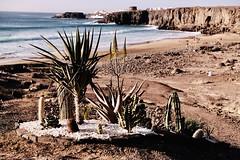 Fuerteventura_2019_01 (ichbinsEvi) Tags: fujifilmxt2 fujifilm natur landscape beach atlantik sea ocean canarias spain fuerteventura