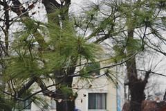 DSC_0220 (SherryFlox) Tags: sofia rilamonastery rila bulgaria plovdiv europe country landscape buildings sunset sky blue green trees people friends walking road