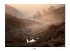 Skellgill (shaun.argent) Tags: morning mist misty winter moorland riverskell ripon yorkshire shaunargent seasons bracken river water trees tree