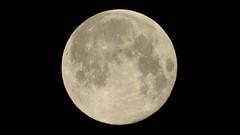 Supermoon Полнолуние (unicorn7unicorn) Tags: луна полнолуние supermoon moon night 52weeksthe2019edition 3652019 day51365 20feb19 contest