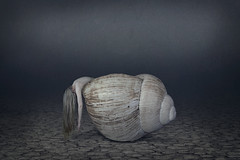 Break (Nwywre) Tags: outdoor shooting concept conceptual surreal composition photomanipulation digiart art fineart darkart horror dark snail snailshell schneckenhaus schnecke nude akt longhair