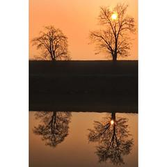 Double double (Robyn Hooz) Tags: padova alberi trees reflections riflessi rami sole alba mirror doppio veneto luce canale vision vista love