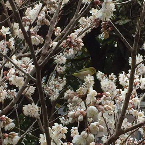 春がやって来た