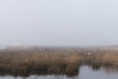 (CarolienCadoni..) Tags: sonyilcaa99m2 sony ilca99m2 sal2470z 2470mmf28zassm mist mistymorning water lofar drenthe netherlands holland