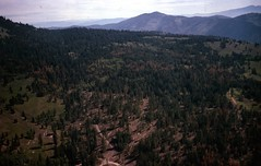 1975. Western spruce budworm defoliation. Wenatchee National Forest, Washington. (USDA Forest Service) Tags: usda usfs forestservice foresthealthprotection stateandprivateforestry region6 r6 divisionoftimbermanagement pacificnorthwestregion insectanddiseasecontrol forestinsect foresthealth forestprotection forestentomology pnw westernsprucebudworm defoliation treedamage 1975 wenatcheenationalforest washington davemccomb aerialphoto aerialphotography lowelevation oblique aerialsurvey aerialdetectionsurvey aerialforestinsectanddiseasedetectionsurvey