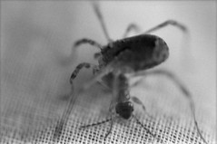 (Silvia Kuro) Tags: spider ant formica ragno macro insect insects nature natura 35mm film cinestill bw bwxx analog analogue analogica analogico