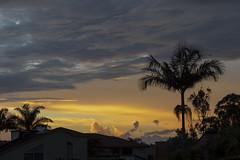 Puesta del sol (José M. Arboleda) Tags: atardecer puestadelsol nube montaña árbol palmera cielo bosque popayán colombia canon eos 5d markiv ef24105mmf4lisusm josémarboledac