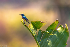 0I7A9018.jpg (Murray Foubister) Tags: africa gadventures spring birds tanazania flora travel 2018