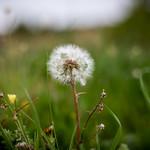 ephemeral & delicate nature thumbnail