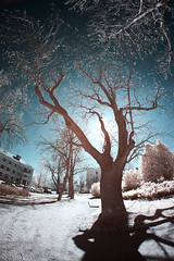 X-A1 2019-04-14 054 (linebrell) Tags: infrared 720nm outdoor 7artisans 75mm fisheye outdoors