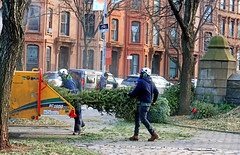 The War On Christmas - Brooklyn, NYC (TravelsWithDan) Tags: christmastrees park cityemployees chipper brownstones candid helmets goggles safety brooklyn nyc newyork street canong9x city urban outdoors people