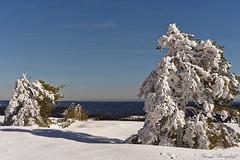 Hornisgrinde (pbantz67) Tags: allemagne forêtnoire hornisgrinde neige hiver deutschlandschwarzwaldblackforest winter snow