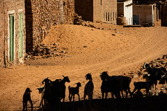 In the shadow (s_andreja) Tags: mauritania chinguetti sand street goat shadow