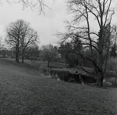 Teich Thielallee 8.3.2019 (rieblinga) Tags: berlin aue teich thielallee dahlem 832019 analog rollei 6008 ilford fp4 sw