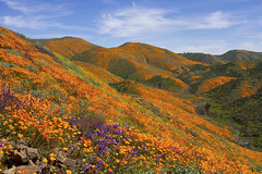 Super Bloom Lake Elsinore California (swissuki) Tags: sky super bloom lake landscape elsinore ca california us