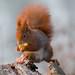 Squirrel van Damme :)