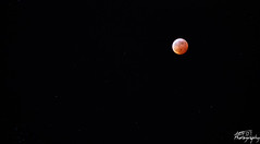 Blood Moon. Lunar Eclipse. 2019. (Amy Thornberry) Tags: lunar moon eclipse lunareclipse 2019 eclipse2019 bloodmoon blood red redmoon kentucky nicholasville canon canon6dmark2 canon6d canon6dmk2 300mm 75300mm 24mm