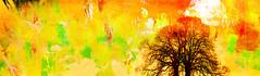 2 become 1 (jackaloha2) Tags: tree trees abstract layer layers photoshopcc color colorful sun subtraction abstractreality