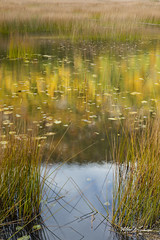 Grasses In The Breeze_27A7672 (Alfred J. Lockwood Photography) Tags: alfredjlockwood nature landscape tarn pond water reflection grasses autumnalcolor fallcolor autumn morning acadianationalpark maine wind motion breeze